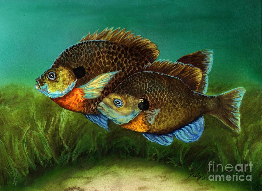 Pretty Little Panfish Painting  - Pretty Little Panfish Fine Art Print
