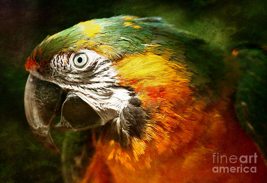 Parrot Photograph - Pretty Polly by Lee-Anne Rafferty-Evans