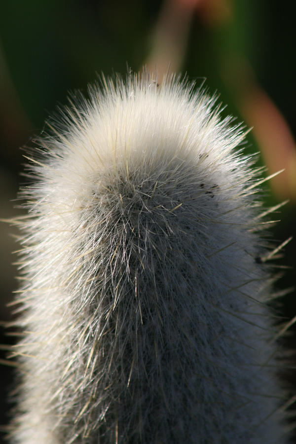 Prickles Tickles Photograph