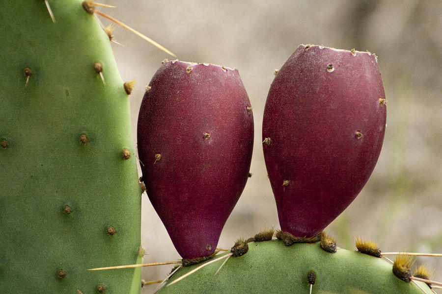 how to clean prickly pear fruit
