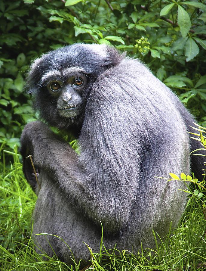 Primate Photograph