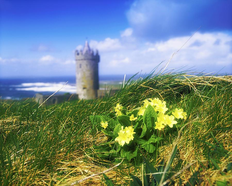 Primrose Flower In Foreground Photograph  - Primrose Flower In Foreground Fine Art Print