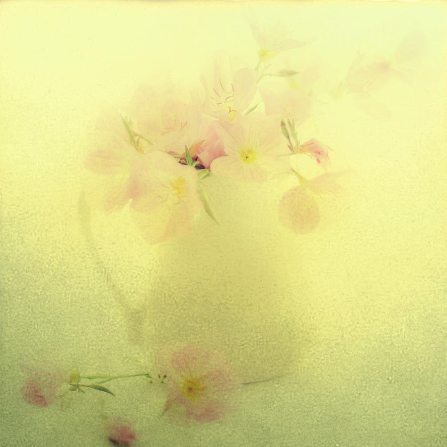 Pastel Flowers Photograph - Primrose In Pastel by Linde Townsend