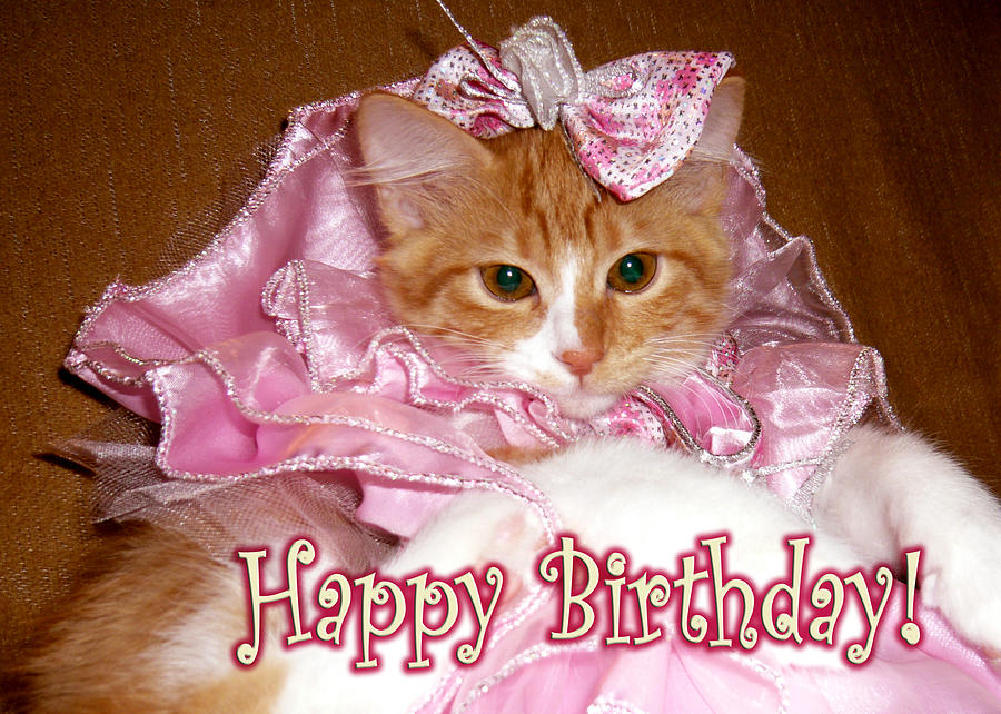 Kitten Happy Birthday Photograph - Princess Kitten Happy Birthday    Funny Happy Birthday Kitten