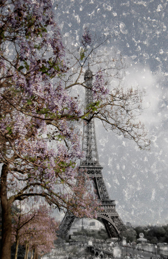 Printemps Parisienne Photograph  - Printemps Parisienne Fine Art Print