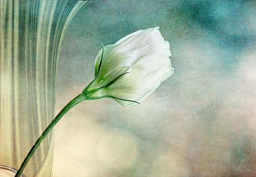 Flowers Photograph - Pristine by Margaret Hormann Bfa
