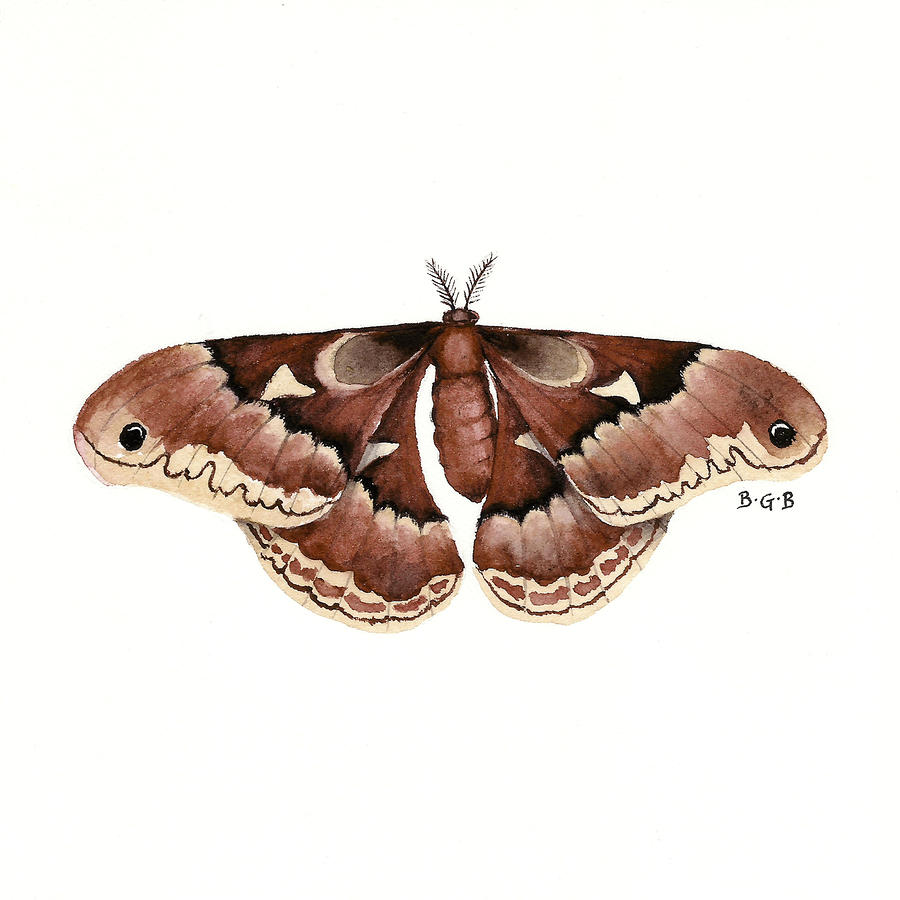 Promethea Moth Painting