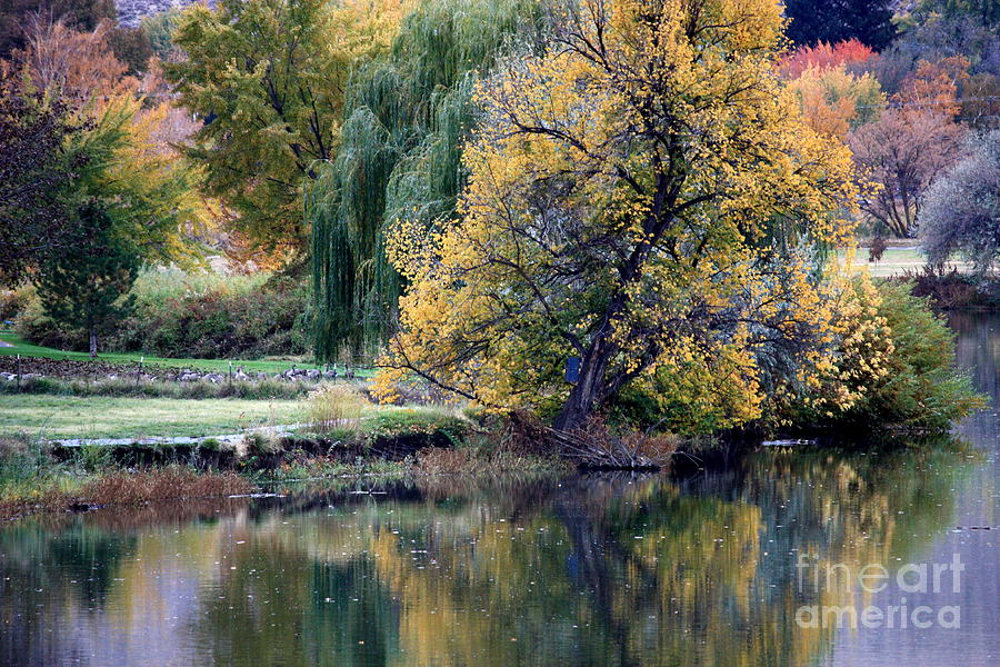 Prosser - Autumn Reflection With Geese Photograph  - Prosser - Autumn Reflection With Geese Fine Art Print