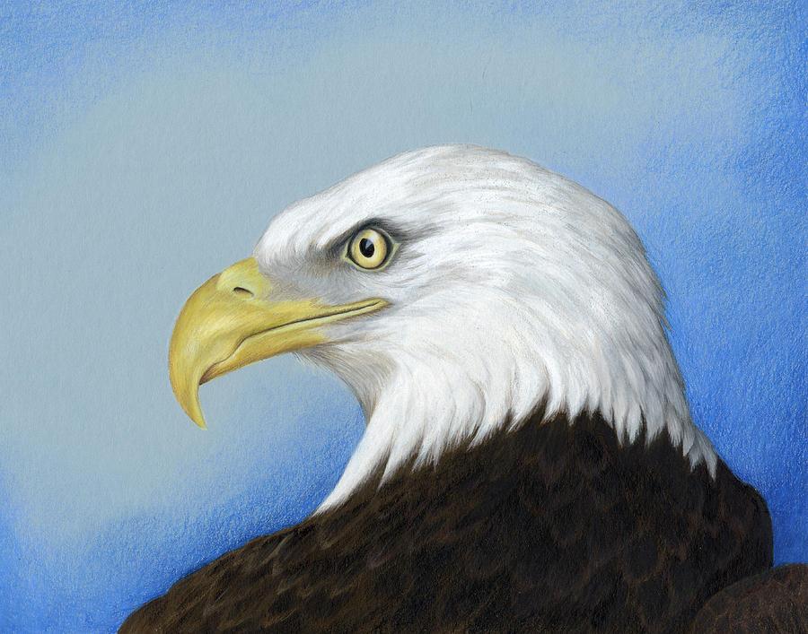 Eagle Drawings - Proud Eagle  Eagles Drawings Color
