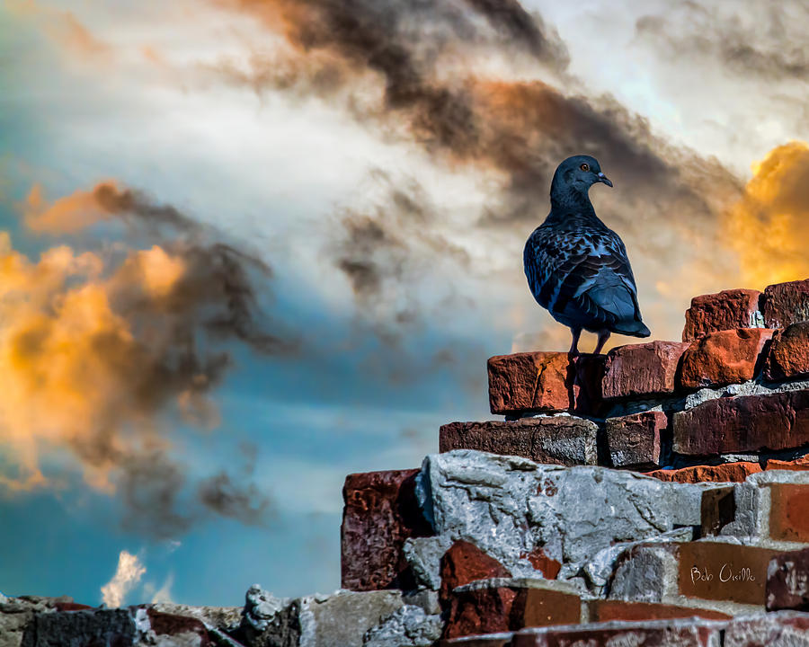 Proud To Be A Pigeon Photograph  - Proud To Be A Pigeon Fine Art Print