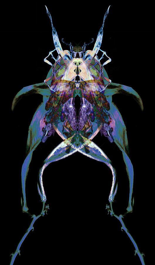 Psycho Frog Bug Photograph
