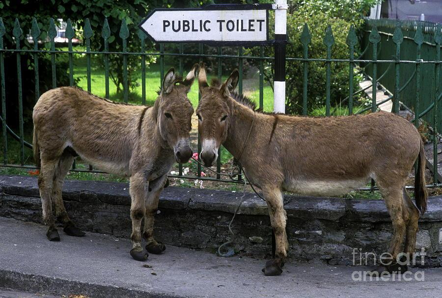 Public Toilet Photograph