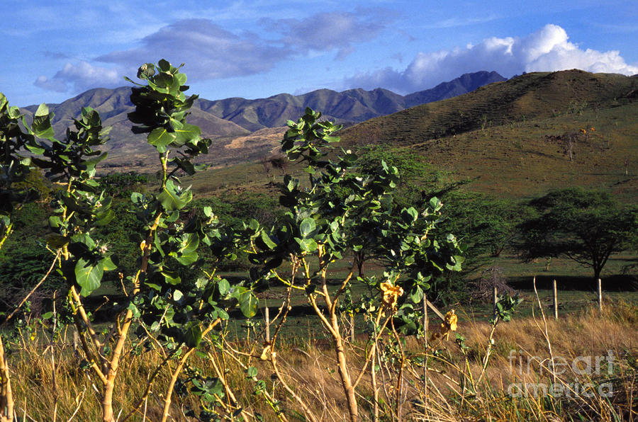 Puerto Rico Cayey Mountains Near Salinas Photograph  - Puerto Rico Cayey Mountains Near Salinas Fine Art Print