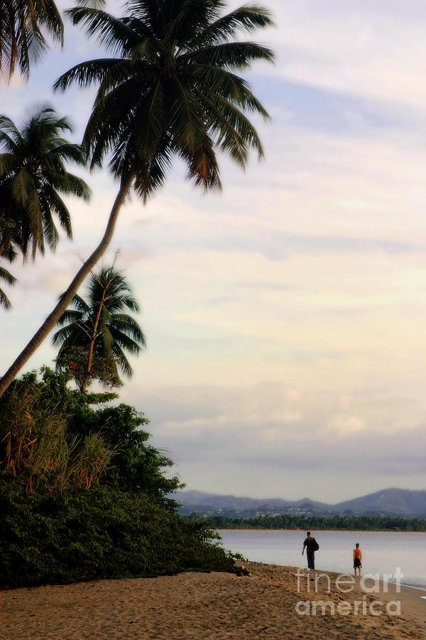 Puerto Rico Palms Photograph