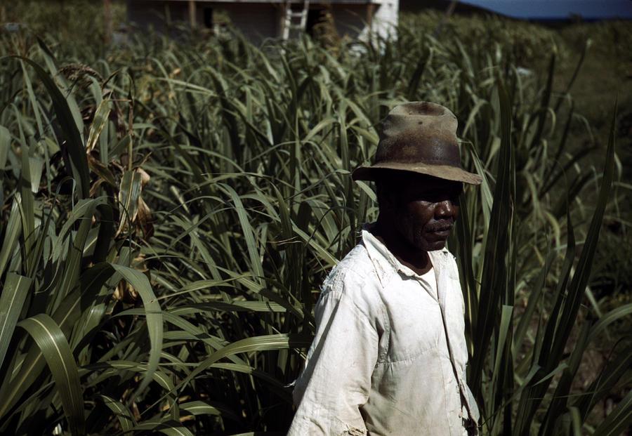 Puerto Rico. Tenant Farmer Photograph
