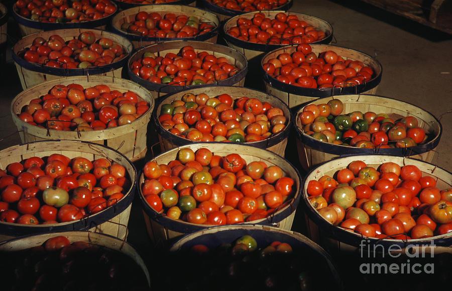 Puerto Rico: Tomatoes Photograph