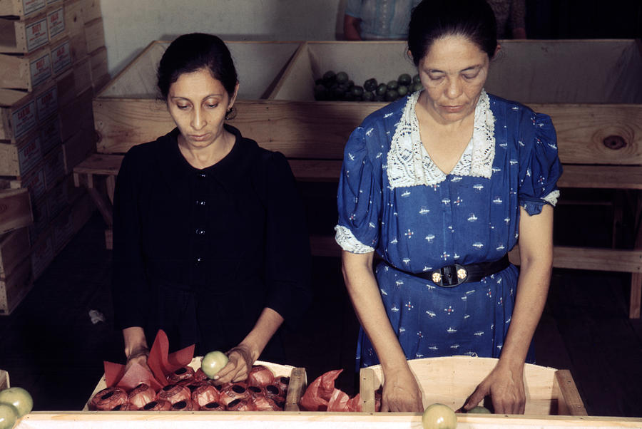 Puerto Rico. Women Sorting And Packing Photograph