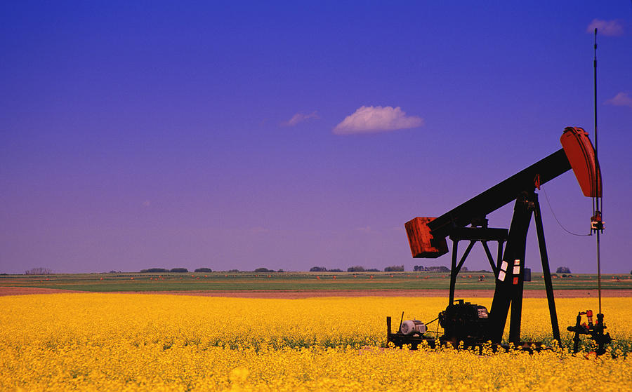 Pumpjack In A Canola Field Photograph  - Pumpjack In A Canola Field Fine Art Print