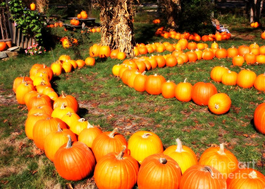 Pumpkin Patch Path Photograph