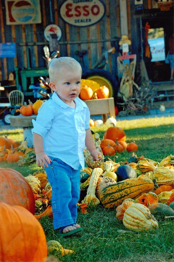 Pumpkin Photograph