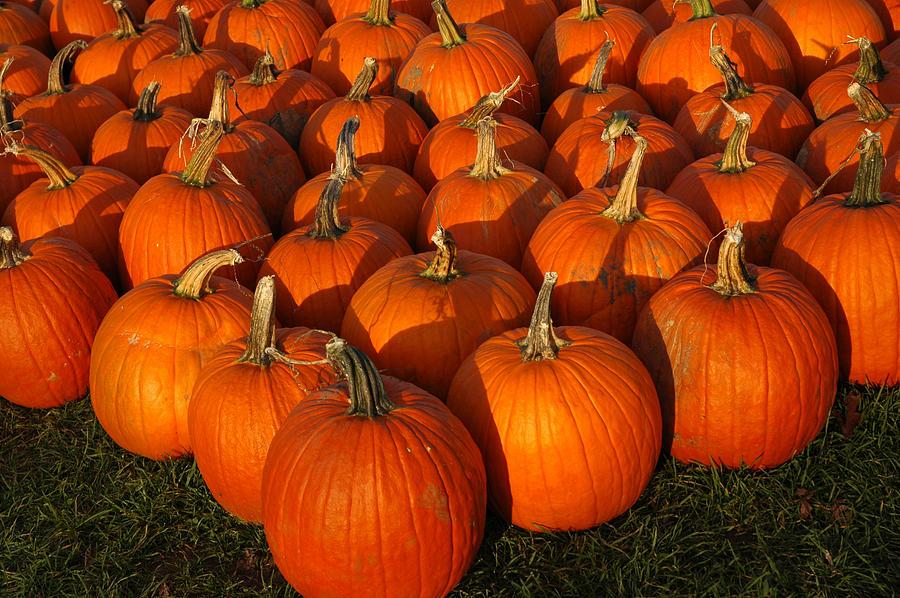 Pumpkin Strike Photograph