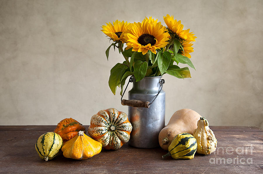 Pumpkins And Sunflowers Photograph
