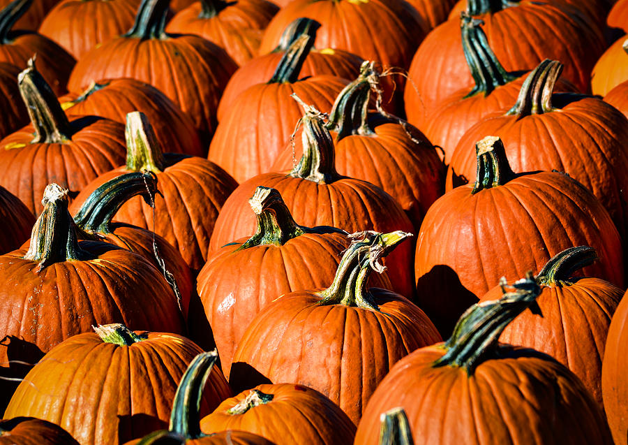 Pumpkins Galore Photograph  - Pumpkins Galore Fine Art Print