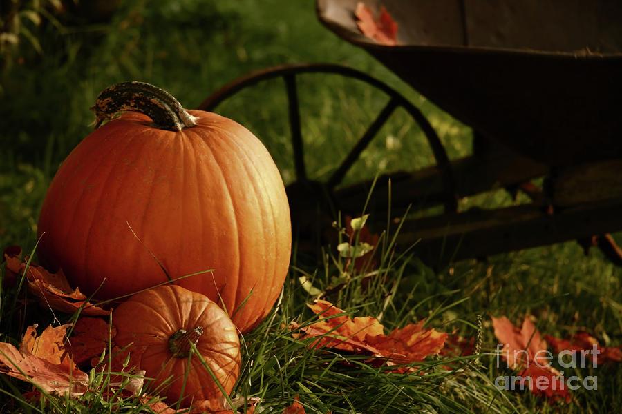 Pumpkins In The Grass Photograph