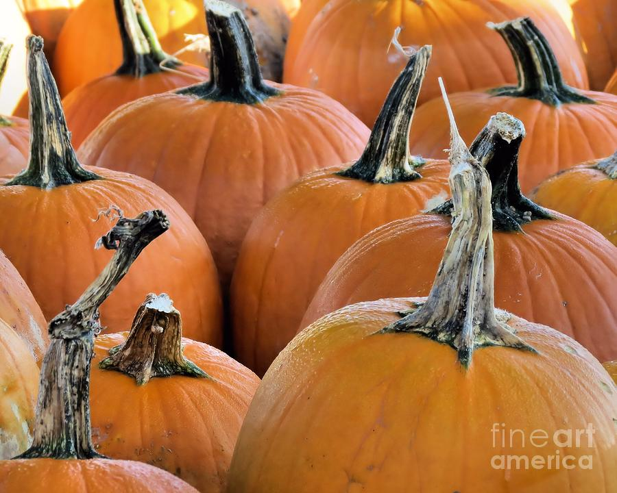 Pumpkins Photograph  - Pumpkins Fine Art Print
