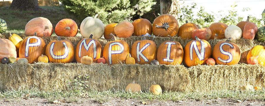 Pumpkins P U M P K I N S Photograph