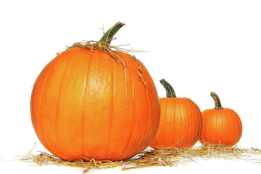 Pumpkins With Straw On White  Photograph