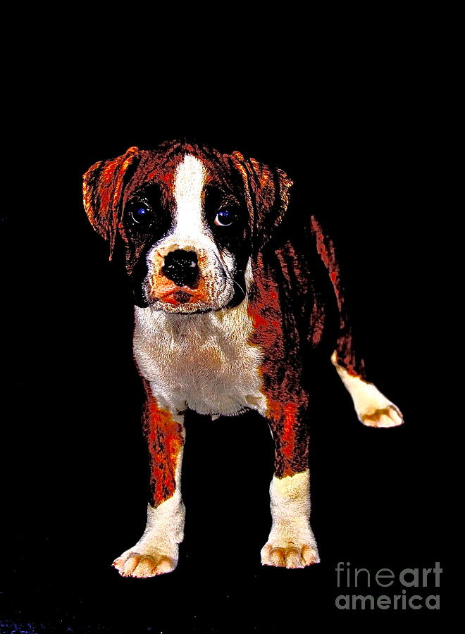Boxer Photograph - Pup 2 by Xn Tyler