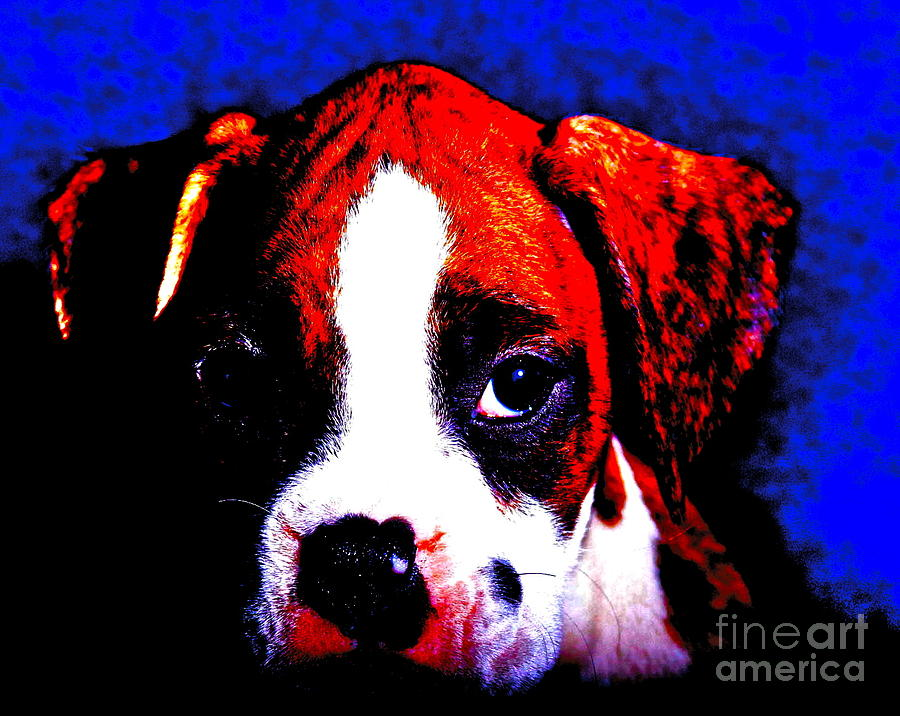 Boxer Photograph - Pup1 by Xn Tyler