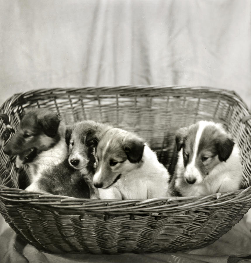 Puppies Of The Past Photograph