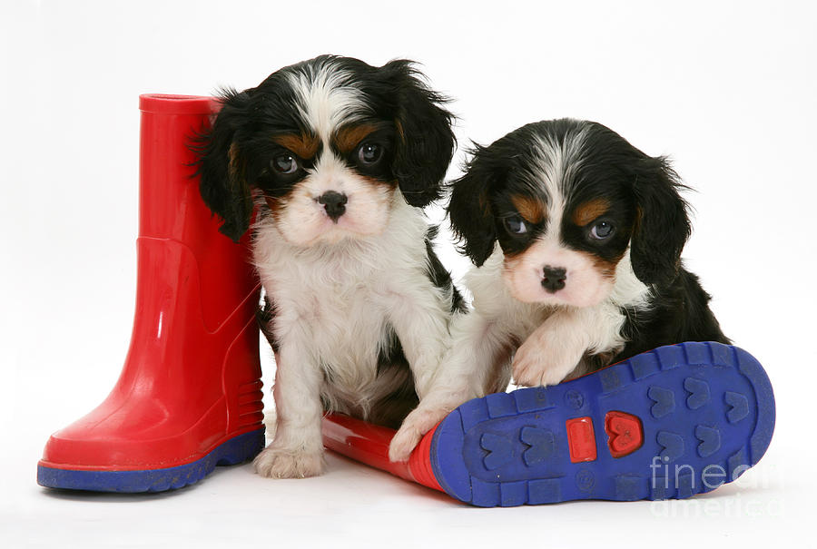 Puppies With Rain Boats Photograph