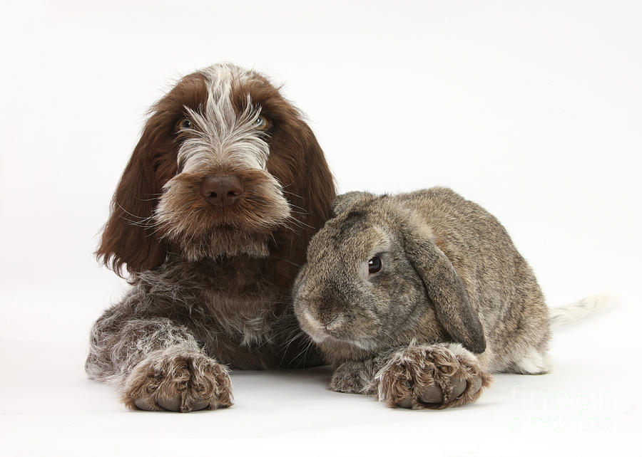 Puppy And Rabbt Photograph