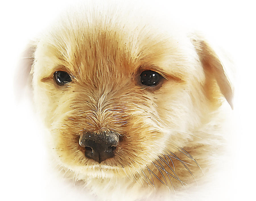 Puppy Art Photograph  - Puppy Art Fine Art Print