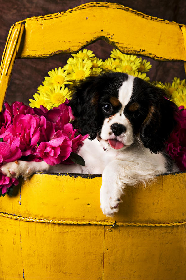 Puppy In Yellow Bucket  Photograph  - Puppy In Yellow Bucket  Fine Art Print