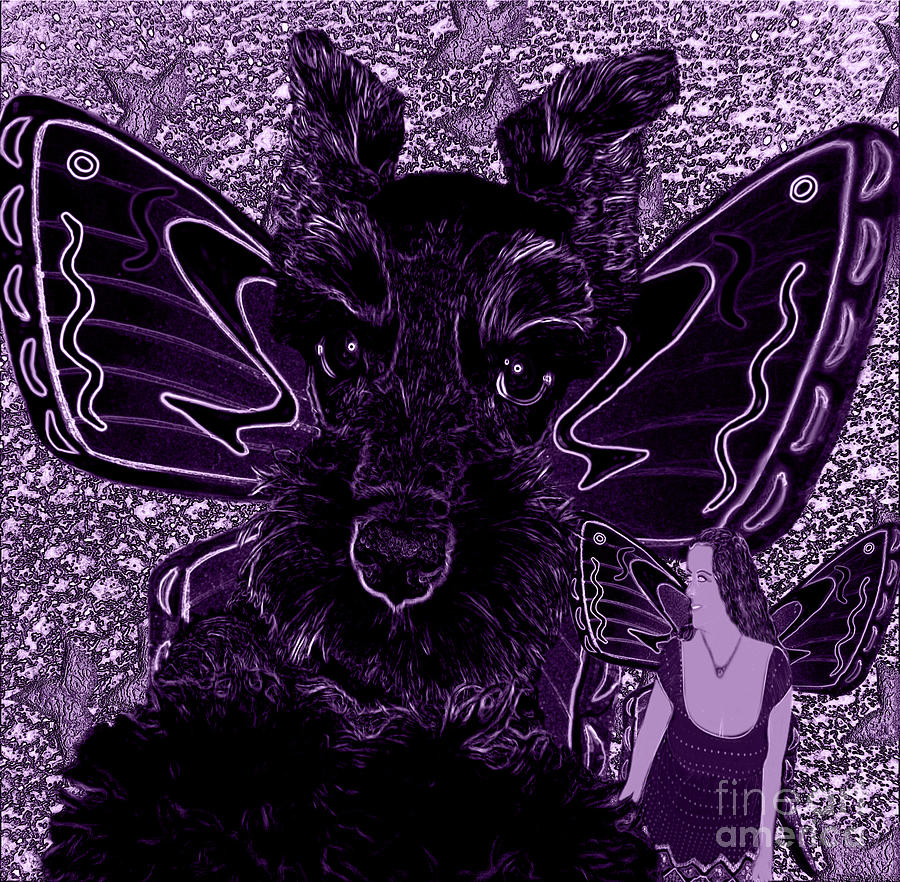 Purple And Black Butterfly Pets Schnauzer Photograph