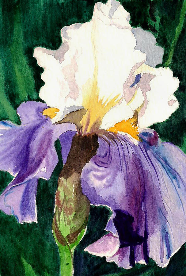 Purple And White Iris Painting  - Purple And White Iris Fine Art Print