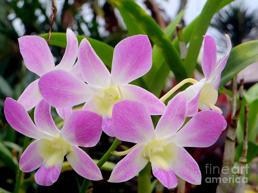Flower Photograph - Purple Balinese Flower by Samantha Mills