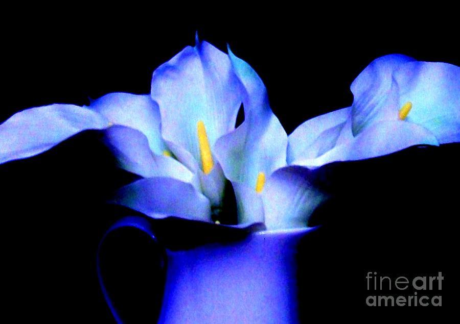 purple blue calla lillies by marsha heiken. Black Bedroom Furniture Sets. Home Design Ideas