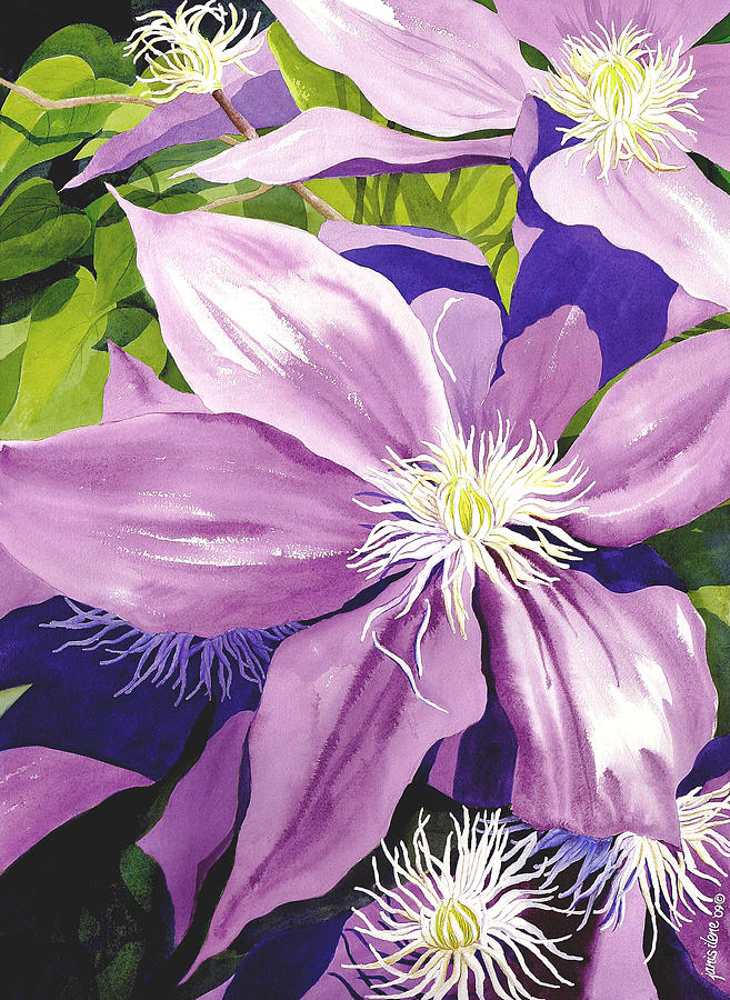 Purple Clematis In Sunlight Painting  - Purple Clematis In Sunlight Fine Art Print