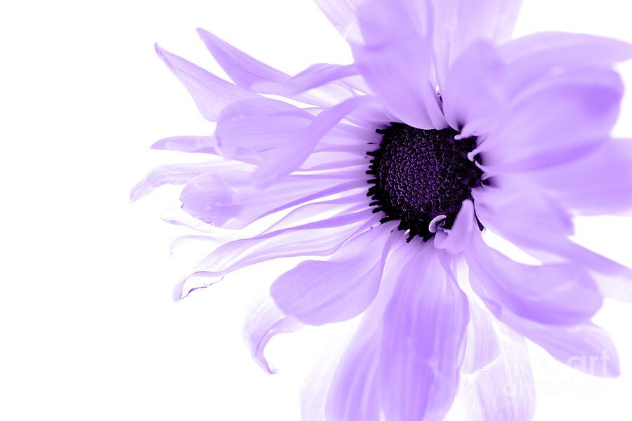 Purple Flower Photograph - Purple Flower by Angela Rose