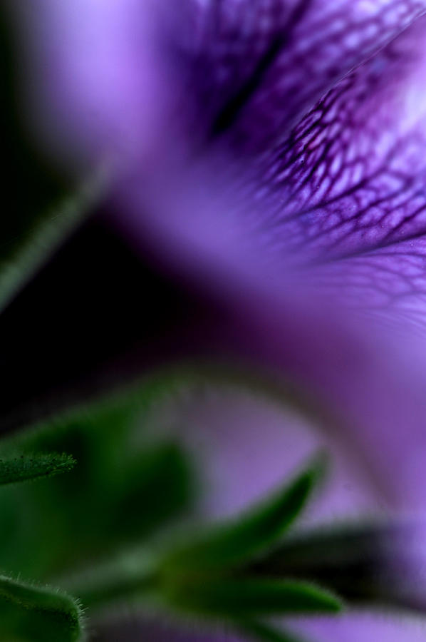 Flower Photograph - Purple Flower by Frank DiGiovanni