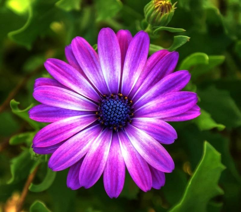 Purple Flowers For Your Garden, Dark Purple Flowers, Purple Flowers