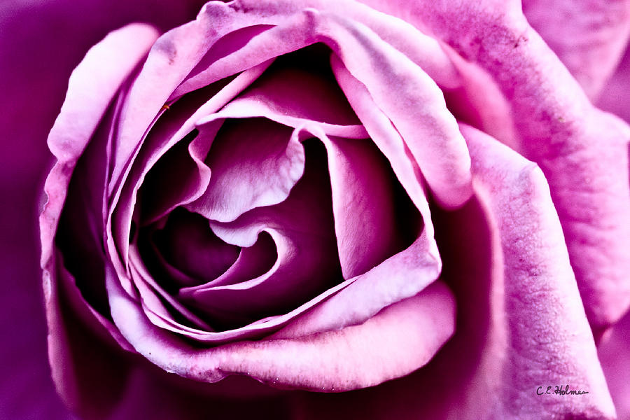 Purple Folds Photograph  - Purple Folds Fine Art Print