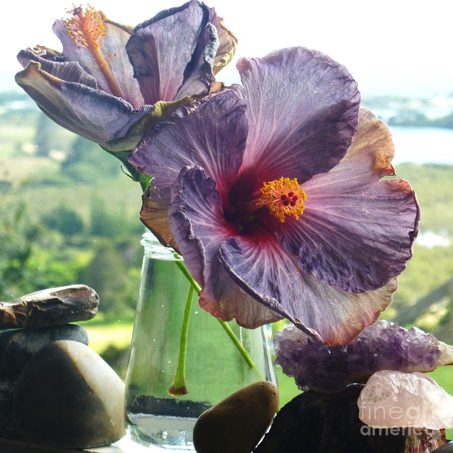 Purple Hibiscus Full Movie Bleach Episode 281 English Dubbed