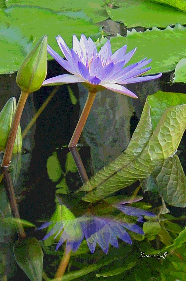 Lotus Photograph - Purple Lotus by Suzanne Gaff