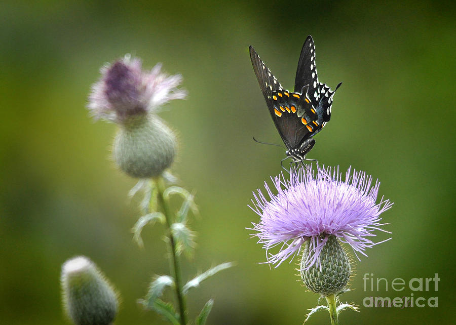 Purple Majesty Photograph  - Purple Majesty Fine Art Print